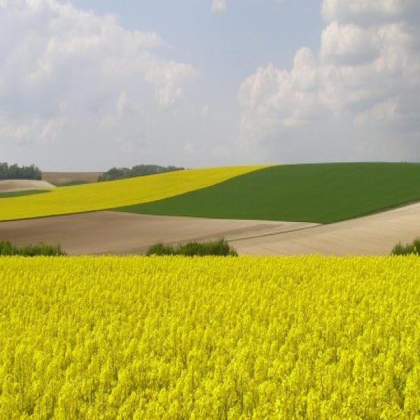 Offres de vente Propriété Agricoles Guilly 36150